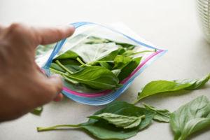 loading plastic bag with basil leaves